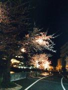 夜桜ライトUP2